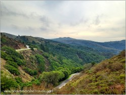 Muir Woods Road from Sun Trail