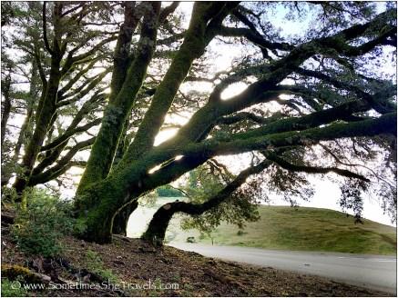 Morning Light Through Trees 3