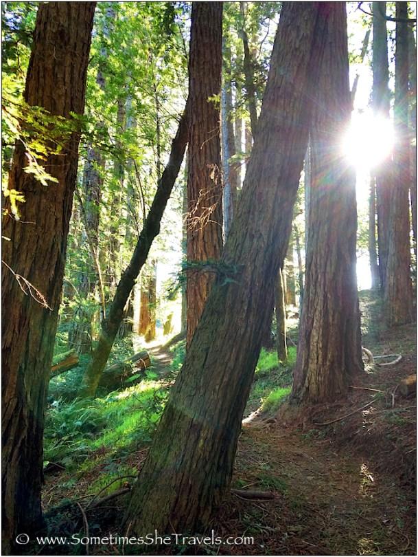 I love the morning sun through the redwoods.