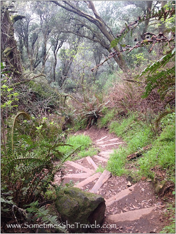 Descending toward Redwood Creek and the Steep Ravine on Dipsea