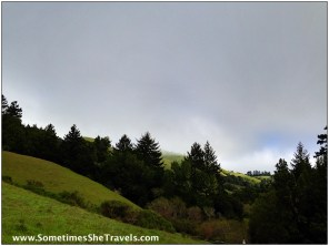It was foggy when we started up Devil's Gulch Road, which is located in Samuel P. Taylor Park, Marin County.