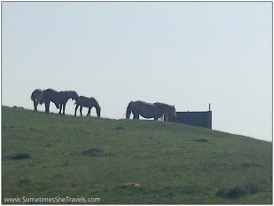 Rumor has it that these are wild horses.