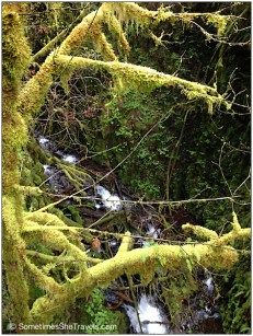 Lots of moss and creeks flowing into the river