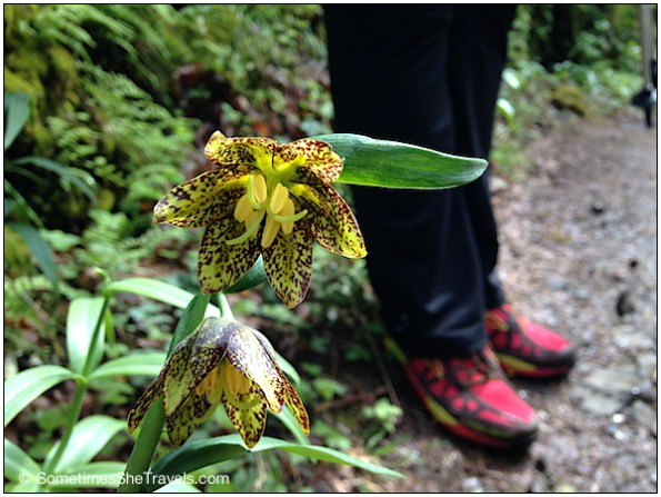 """Fritillaria or """"Checkered Lily"""" and Jen's beautiful Brooks Cascadias"""