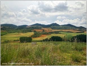 CF Day 5: field views