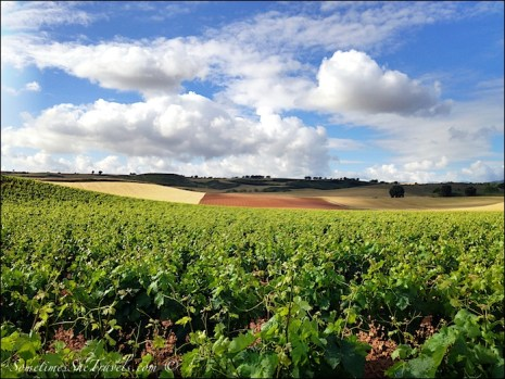 camino de santiago grapevines fields sky clouds