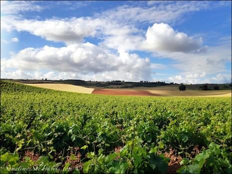 camino de santiago grapevines fields sky clouds