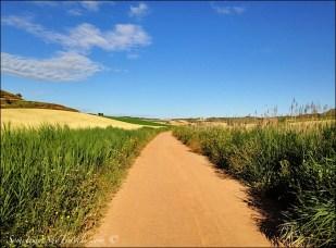 camino de santiago long straight road 3