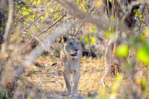 Linyanti Botswana
