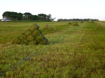 Stooks in the fields
