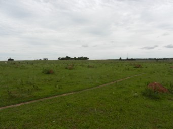 Miles of termite mounds