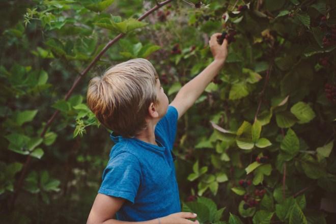 quin picking berries