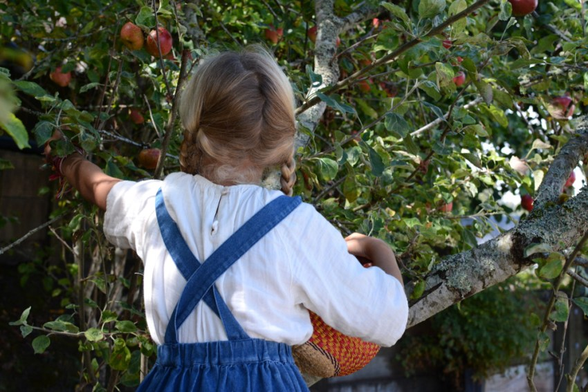 ivy picking apples