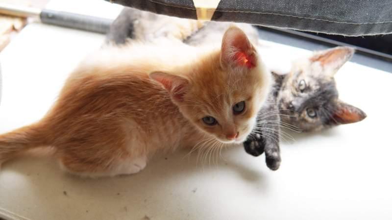 子猫が我が家にやってきた、しかも2匹🐾