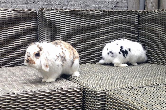 konijnen5