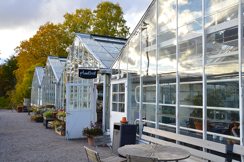 Rosendals Trädgård plantbod