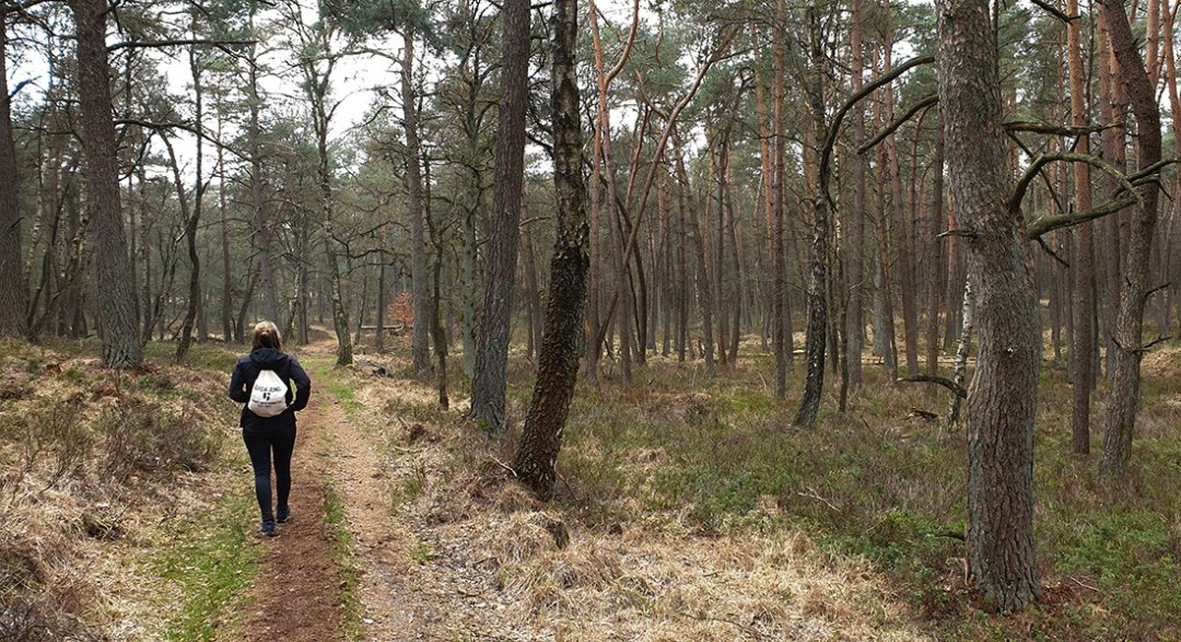 Wandelen in Nationaal Park Veluwezoom amy