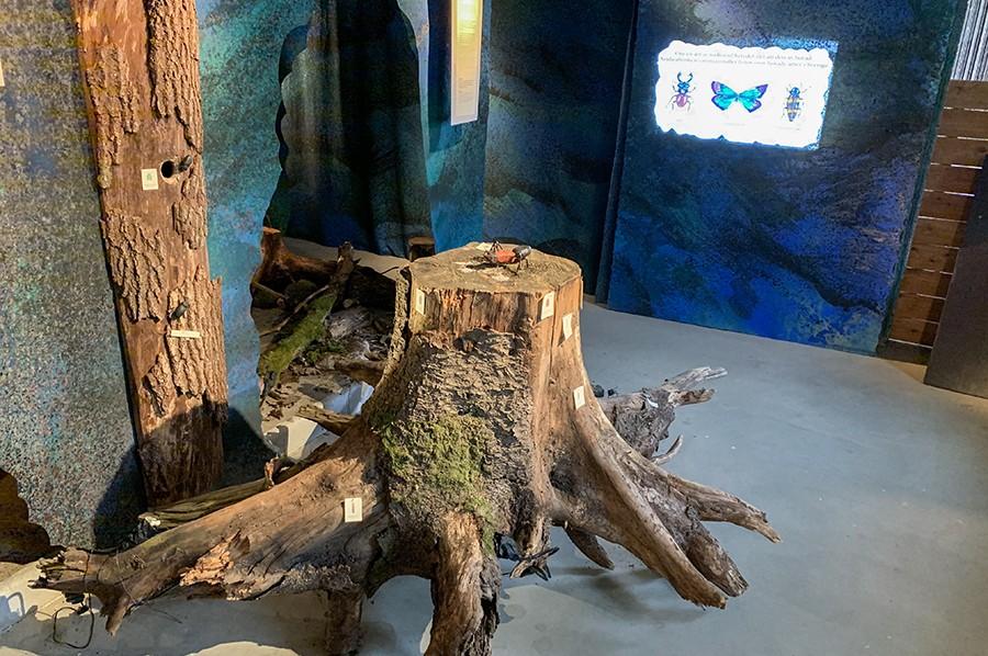 Fulltofta Naturcentrum - sommarmorgon.com