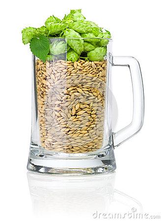 mug-beer-full-barley-hops-white-background-30831977