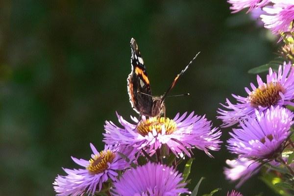 Schmetterling am Kiekeberg