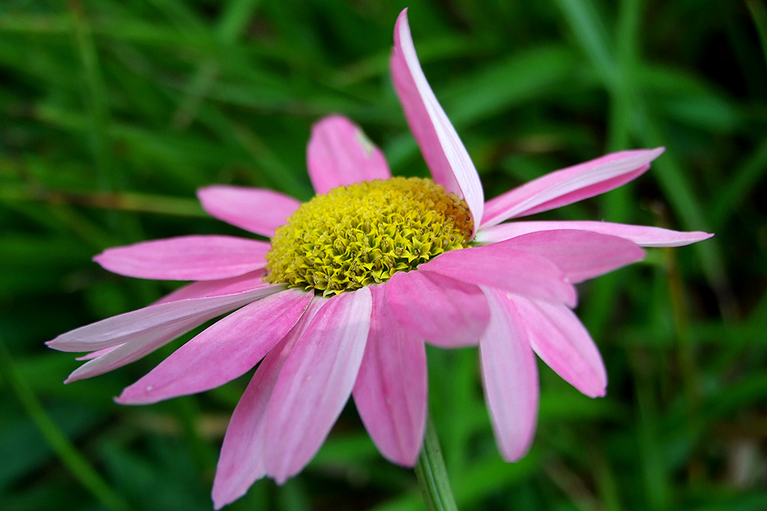 Sommer Blumen Blüten