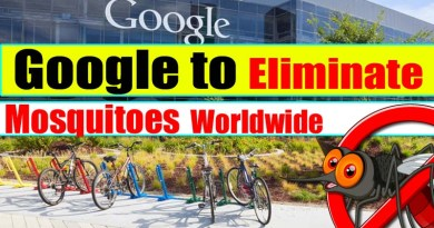 Google Working on Mosquito Elimination Worldwide