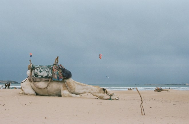 Camels takes naps too! Photo Credit: Taneel Tamusk, Flickr