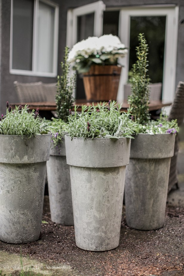 The Best Tip for Filling Large Outdoor Planters/tall grey planters - So Much Better With Age