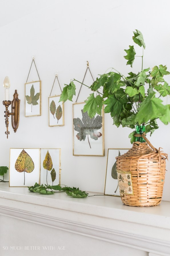 Fall leaves in frames on mantel with fresh leaves in wine jug.