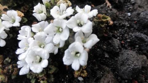 Dewey Flowers on Trail