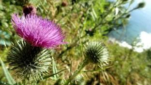 Tasman Flowers