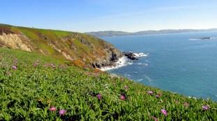 Bodega Coastal Views