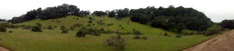 Annadell Hillside Pano