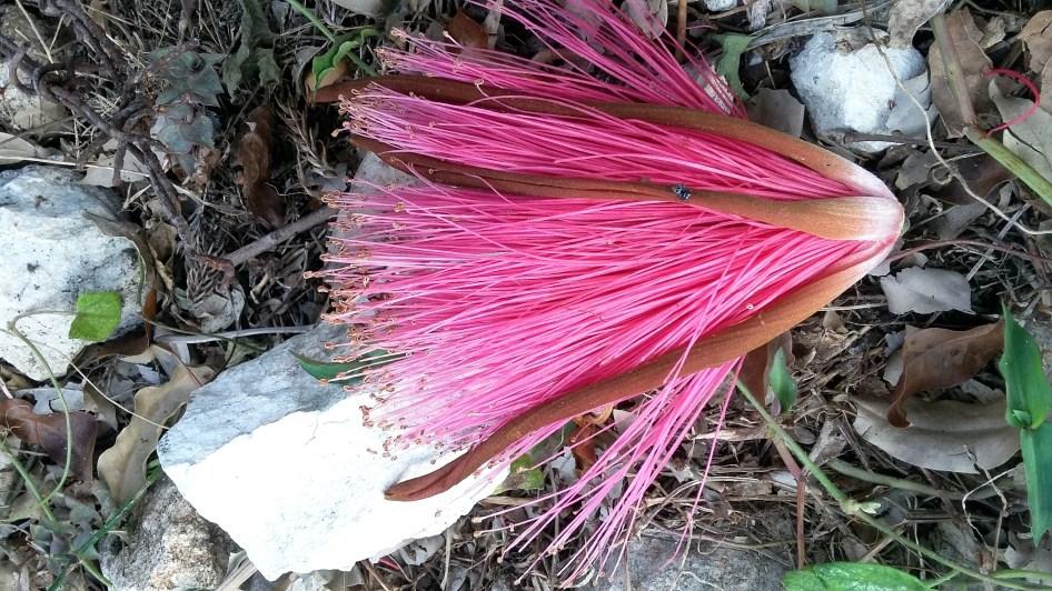 Flowerpuff 3
