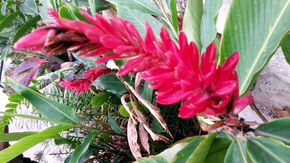 Ginger Flower