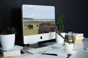 象とコンピューターの画像