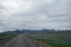 En coche entre campos de lupinas rodeados de glaciares. Paisajes infinitos.