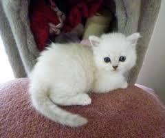 gato burnilla 3