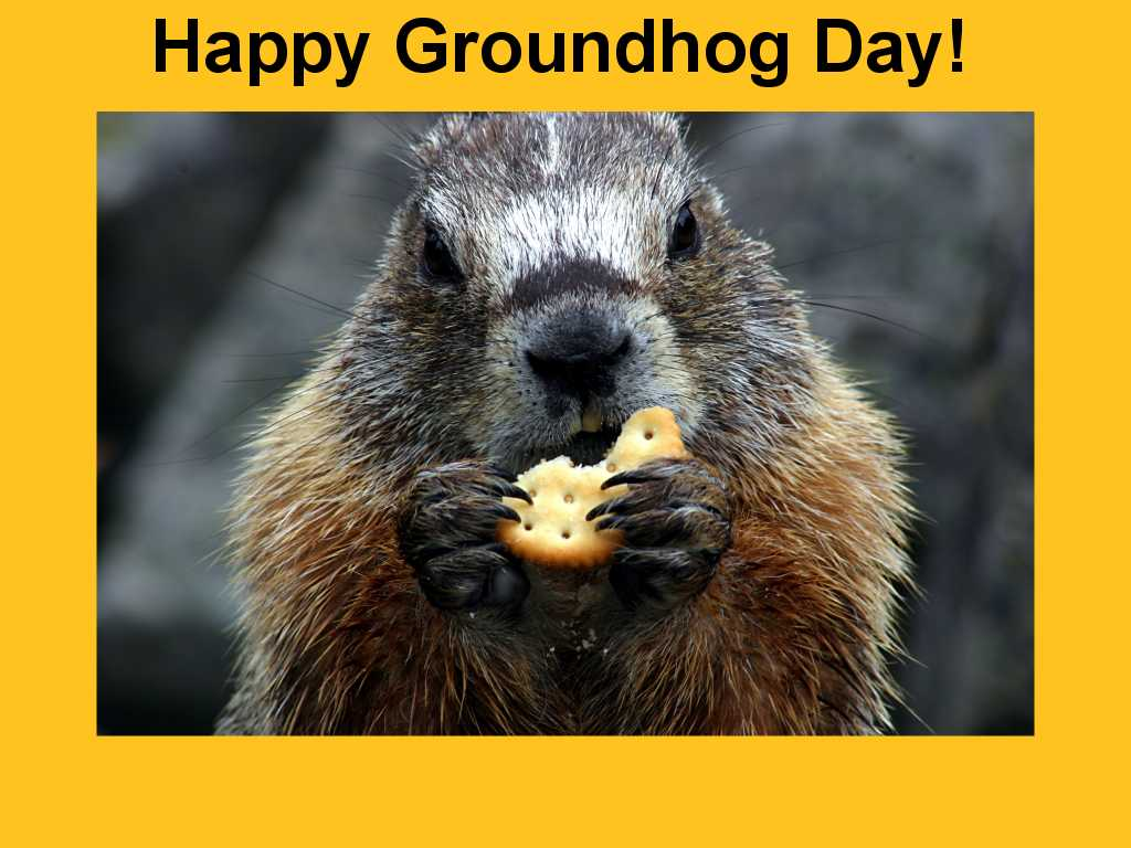 An Early Spring Is On The Way According To Groundhog