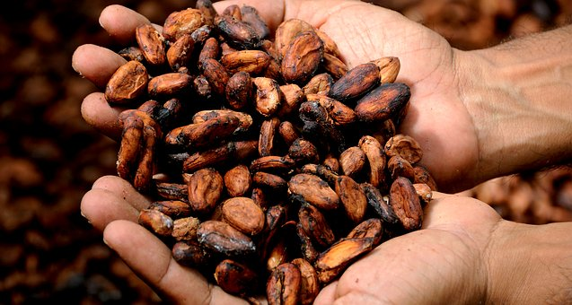 Hands with cocoa beans