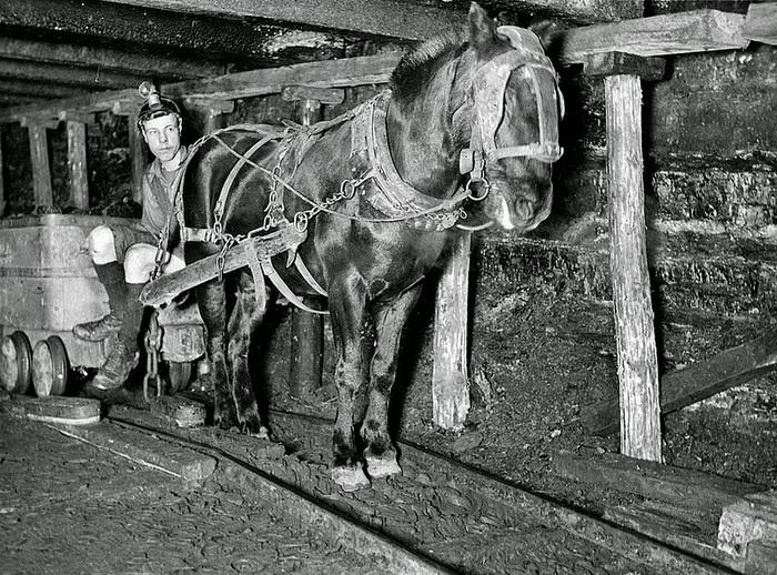коногон в шахте