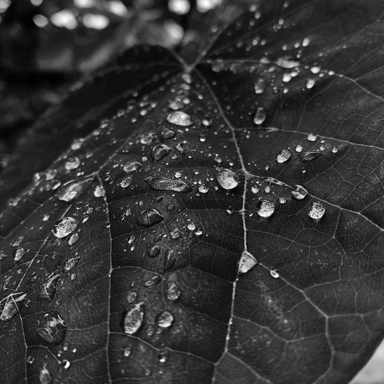 close up water drops on leaf