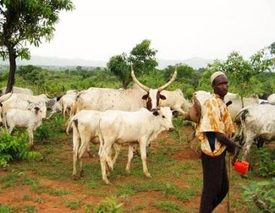 Berom Leaders: Help Retrieve Our 55 Villages From Fulani Herdsmen