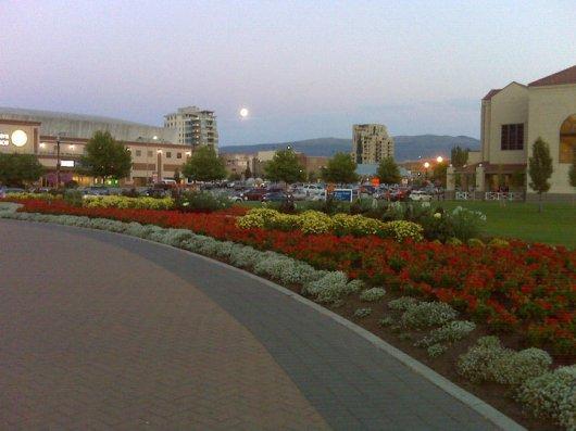 Songdove Books - Gardens and Moon