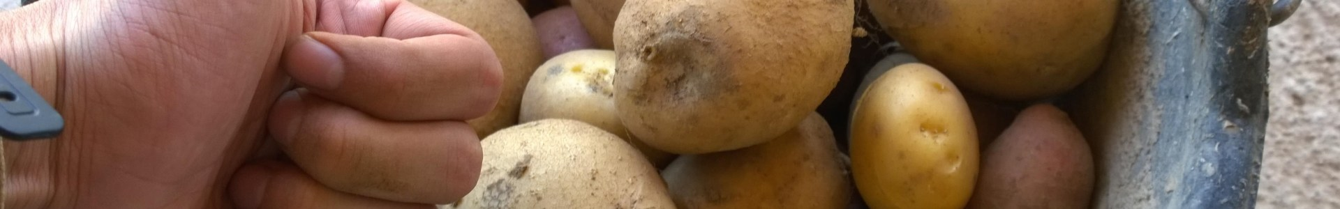 The Lowly Potatoe Gets Picked on Again