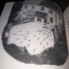 Comment un écureuil un héron Horatio Clare Image perso Charlie 2