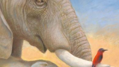 Photo of L'éléphante qui cherchait la pluie de M. Piquemal & A. Godard