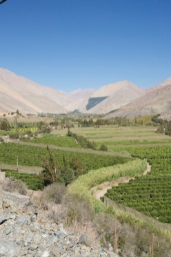 VALLE DE ELQUI / Culture du pisco
