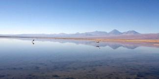 ATACAMA / Laguna Chaxa