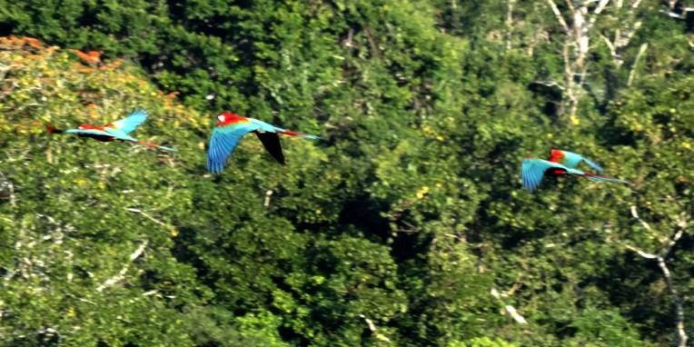 PN MADIDI / Dans la selva (jungle) : paracas